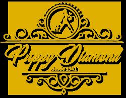 PUPPYDIAMOND | Venta de chihuahuas, bichón maltés y lulú de pomerania